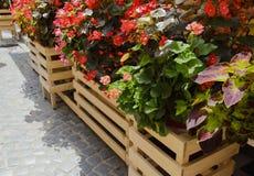 Flores en potes en las calles Diseño, Foto de archivo libre de regalías