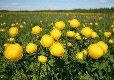 Flores en prado Fotos de archivo