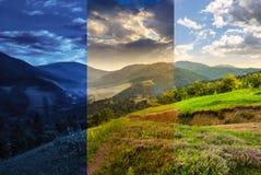 Flores en prado de la ladera con el bosque en montaña Fotografía de archivo libre de regalías