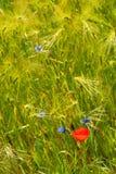 Flores en prado verde Fotografía de archivo libre de regalías