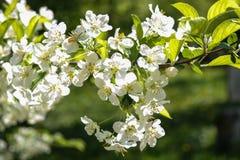 Flores en primavera Fotografía de archivo