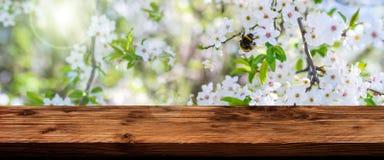 Flores en primavera con la tabla de madera Imagen de archivo libre de regalías