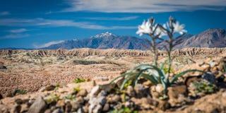 Flores en primero plano con las montañas en fondo Imagen de archivo libre de regalías