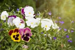 Flores en rayos del sol Imagenes de archivo