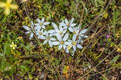 Flores en roca fotografía de archivo libre de regalías