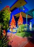 Flores en San Lorenzo los yves Fotografía de archivo