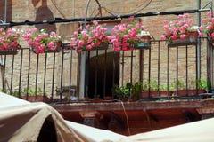 Flores en Siena Balcony foto de archivo libre de regalías
