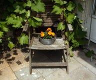 Flores en silla vieja Fotografía de archivo