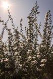 Flores en sol de la primavera. Fotografía de archivo