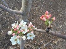 Flores en un árbol Imagen de archivo libre de regalías