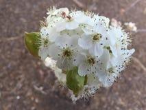 Flores en un árbol Fotografía de archivo