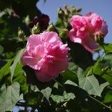 Flores en un árbol Imágenes de archivo libres de regalías