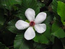 Flores en un árbol fotos de archivo