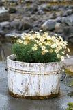Flores en un barril Imágenes de archivo libres de regalías
