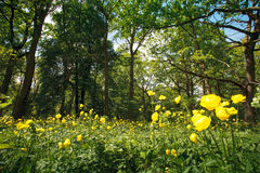 Flores en un bosque soleado Fotografía de archivo libre de regalías