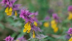 Flores en un campo metrajes