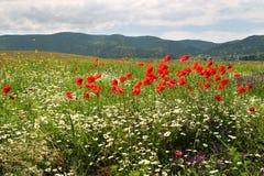 Flores en un campo foto de archivo libre de regalías