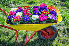 Flores en un carro viejo Fotos de archivo
