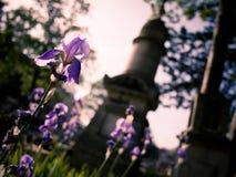 Flores en un cementerio, delante de una tumba Imagen de archivo libre de regalías