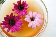 Flores en un envase Imagen de archivo libre de regalías