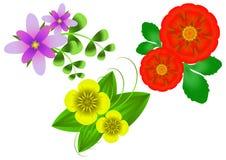 Flores en un fondo blanco Fotografía de archivo libre de regalías