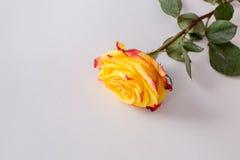Flores en un fondo blanco Fotografía de archivo