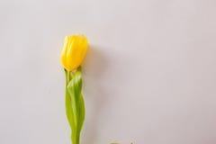 Flores en un fondo blanco Imagen de archivo libre de regalías