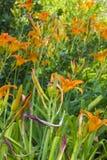 Flores en un fondo de la vegetación imagenes de archivo