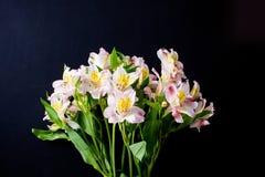 Flores en un fondo negro Fotos de archivo