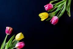 Flores en un fondo negro Imagen de archivo