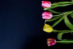 Flores en un fondo negro Imagen de archivo libre de regalías