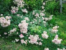 Flores en un jardín Fotos de archivo libres de regalías