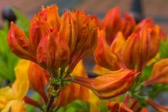 Flores en un jardín Imágenes de archivo libres de regalías