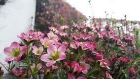 Flores en un jardín imagen de archivo
