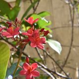 Flores en un jardín Imagenes de archivo