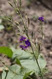 flores en un jardín de la cabaña Fotos de archivo libres de regalías