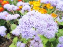 Flores en un macizo de flores en un primer del jardín Fotos de archivo