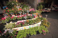 Flores en un mercado europeo Fotos de archivo