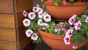 Flores en un pote de arcilla almacen de metraje de vídeo