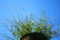 Flores en un pote grande con el cielo azul fotografía de archivo
