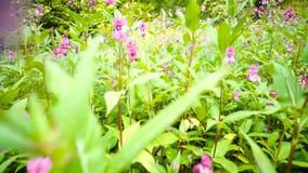 Flores en un prado almacen de metraje de vídeo