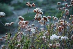 Flores en un prado del verano tardío Imágenes de archivo libres de regalías
