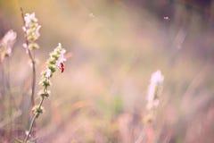 Flores en un prado soleado Fotografía de archivo
