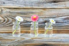 Flores en un tarro de cristal Margaritas en un tarro de cristal El fondo de los tablones viejos del pino con una textura pronunci Imagen de archivo
