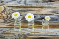 Flores en un tarro de cristal Margaritas en un tarro de cristal El fondo de los tablones viejos del pino con una textura pronunci Foto de archivo