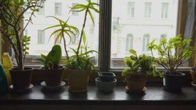 Flores en un travesaño casero retro de la ventana en potes almacen de metraje de vídeo