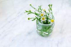 Flores en un vidrio Imagen de archivo