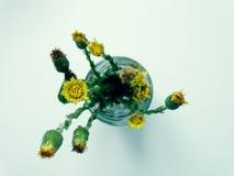 Flores en un vidrio Fotografía de archivo libre de regalías