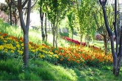Flores en una arboleda Fotos de archivo