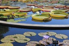 Flores en la charca Imagen de archivo libre de regalías